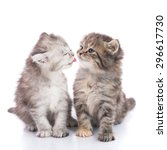 Stock photo two cute kitten kissing on white background isolated 296617730