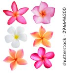 Stock photo plumeria flowers isolated on white background 296646200