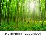 sun beam in a green forest | Shutterstock . vector #296650004