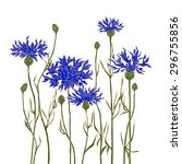 cornflowers on a white... | Shutterstock .eps vector #296755856