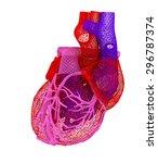 human heart | Shutterstock . vector #296787374