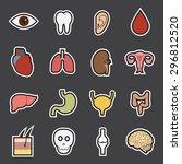 human organs icon   Shutterstock .eps vector #296812520