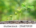 baby plants growing in... | Shutterstock . vector #296870939