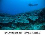 diver blue water scuba diving... | Shutterstock . vector #296872868