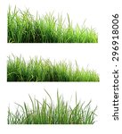 green grass isolated on white... | Shutterstock . vector #296918006