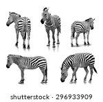 a portrait of zebras in many... | Shutterstock . vector #296933909