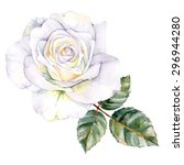 Stock vector white rose watercolor hand painted isolated on background vector illustration 296944280
