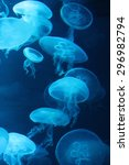 Jellyfish Bioluminescent Unde...