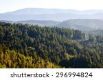 forest overlook at redwood... | Shutterstock . vector #296994824