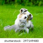 Stock photo australian shepherd puppy lying with a cat on the green grass 297149480
