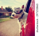 Stock photo  a cute westie west highland terrier with goggles on riding in a car down an urban neighborhood 297153863