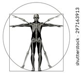 vitruvian human or man as a... | Shutterstock . vector #297163913