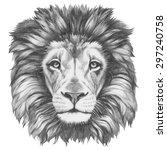 Original Drawing Of Lion....