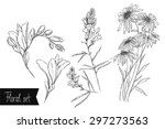 floral vector set   daisies ... | Shutterstock .eps vector #297273563