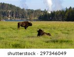 two bison by the yellowstone... | Shutterstock . vector #297346049