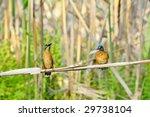 kingfisher  alcedo atthis  | Shutterstock . vector #29738104