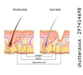 medical structure of a skin ... | Shutterstock . vector #297414698