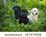 Stock photo group of adorable golden retriever puppies in the yard on the green grass 297474506