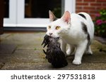 Cat With Bird Prey