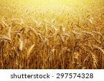 light and wheat | Shutterstock . vector #297574328