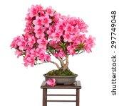 Rhododendron Indicum Osakazuki...