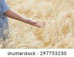 meadow grass in the morning sun ... | Shutterstock . vector #297753230