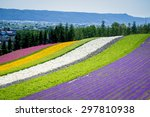Beautiful Lavender Garden In...