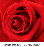 Beautiful Macro Red Rose Flowe...
