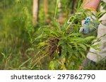 Gardening  Weeding Weeds....