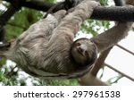 three toed sloth  family... | Shutterstock . vector #297961538