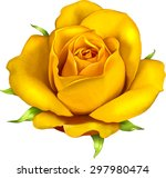 beautiful colorful rose flower... | Shutterstock .eps vector #297980474