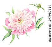 hand drawn watercolor... | Shutterstock . vector #297987914