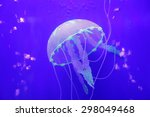 Jellyfish Is A Kind Of Marine...