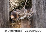 Stock photo little kitten in the old barn 298054370