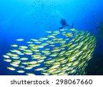 School Of Fish And Scuba Diver...