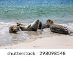 grey seals on the beach of the... | Shutterstock . vector #298098548