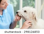 Stock photo pet dog being professionally groomed in salon 298126853