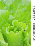 vegetable | Shutterstock . vector #29813917