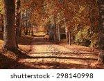 Autumn Park Landscape With...
