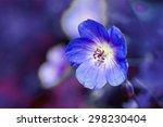 Cranesbill Flower  Geranium ...