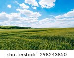 Wheat Field . Green Field With...