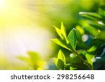 tea leaves at a plantation in... | Shutterstock . vector #298256648
