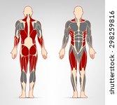 dorsi  glutes  quadriceps ... | Shutterstock .eps vector #298259816