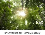 Sun Rays Shining Through Trees...