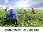 Crowd Of Tea Picker Picking Te...