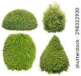 bush on white background  ... | Shutterstock . vector #298322930