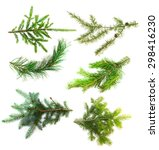 Set Of Branches Of Coniferous...