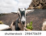 little young goat | Shutterstock . vector #298470659