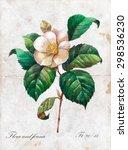 Hand Drawn Botanical...