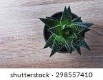 Aloe Vera Plant In A Pot On A...